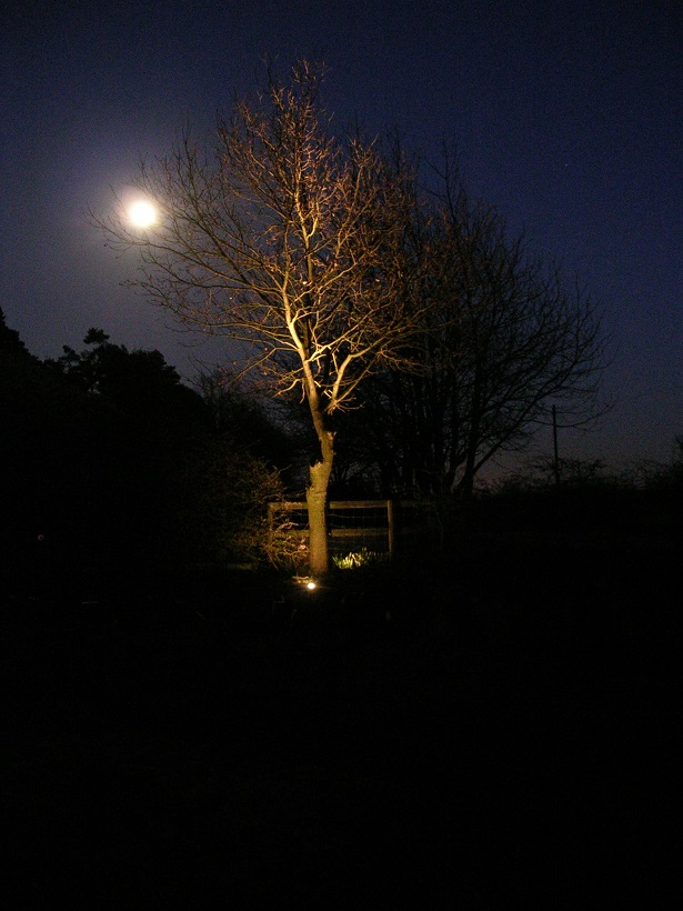 Up lighting trees