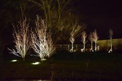 Up lit trees